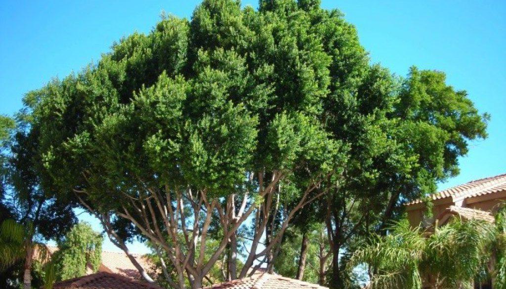 Tree-Care-in-monsun-season