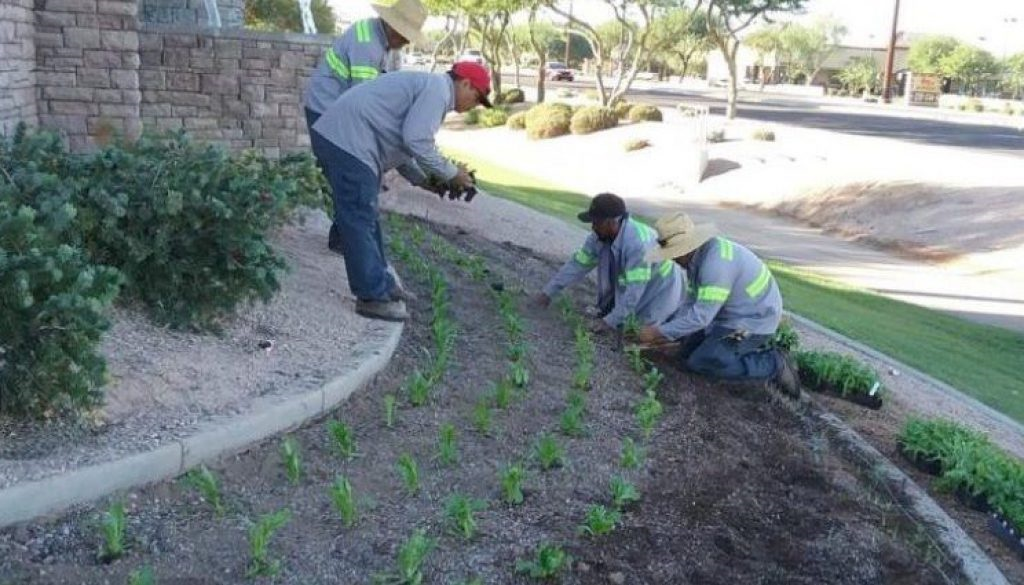planting-fall-annuals