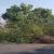 treesinroad