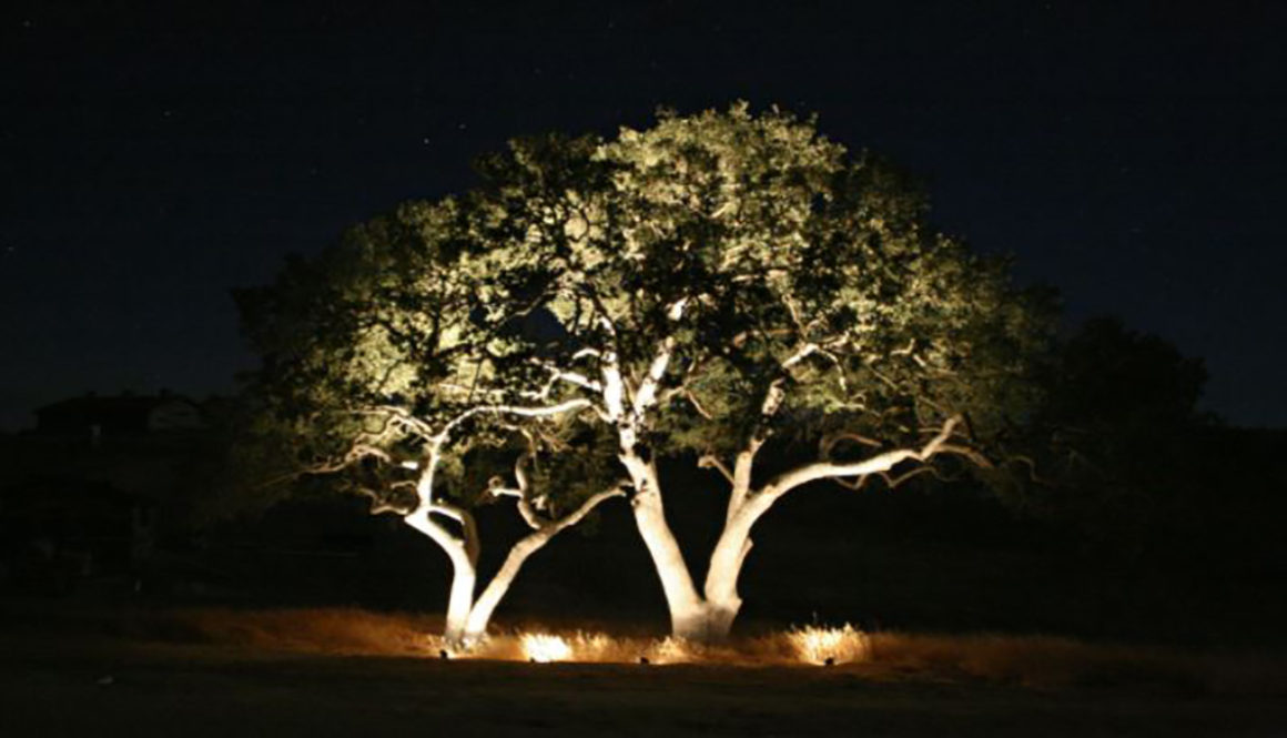 Uplighting.tree