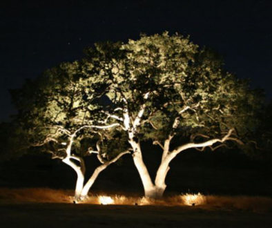 Uplighting.tree